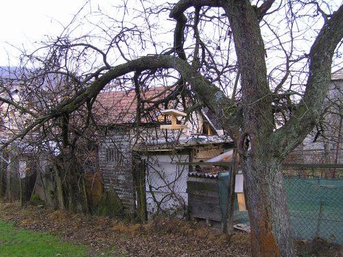 krmítko na stromě